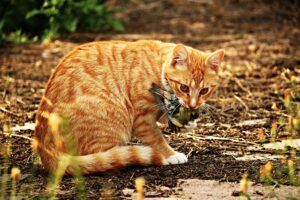 Cat with Greenfinch