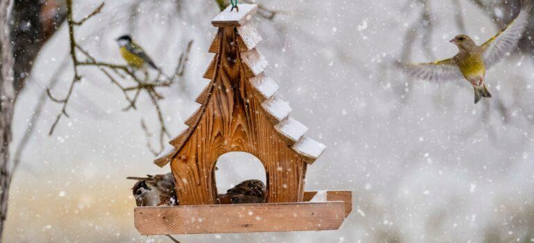 Bird table in the snow
